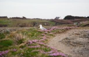 Eco-système de la Pointe des Poulains